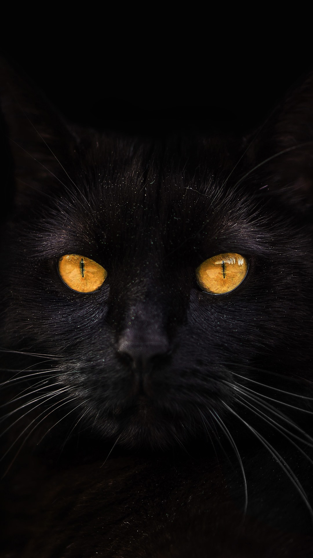 Wallpaper Black Cat Yellow Eyes Darkness 5120x2880 Uhd 5k Picture Image