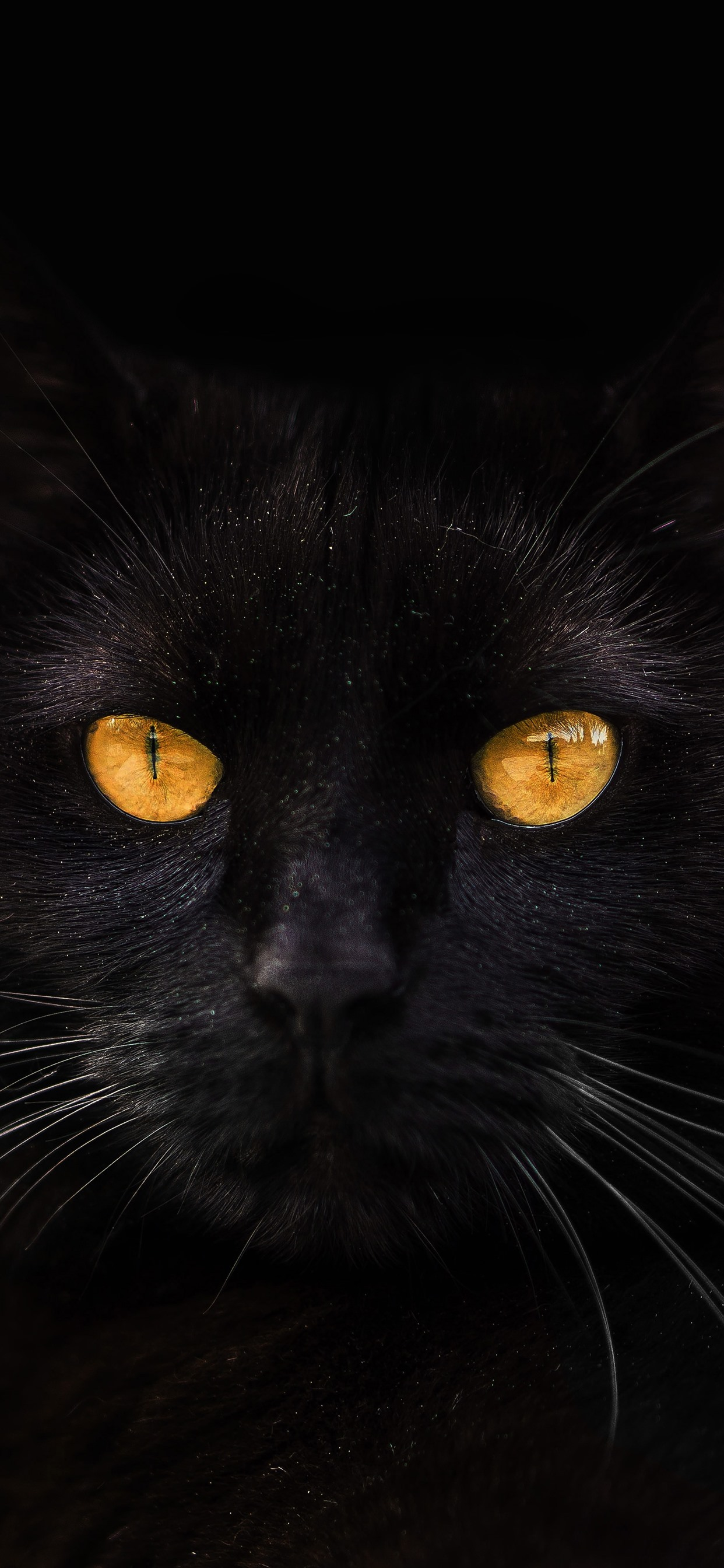 Black Cat Yellow Eyes Darkness 1242x2688 Iphone 11 Pro Xs Max Wallpaper Background Picture Image