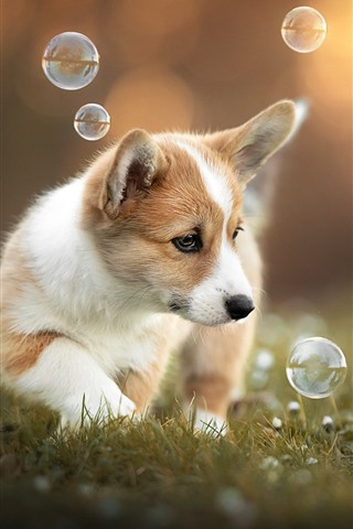 iPhone Wallpaper Cute puppy play bubbles
