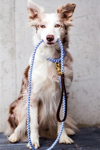 iPhone Wallpaper Dog, rope, pet