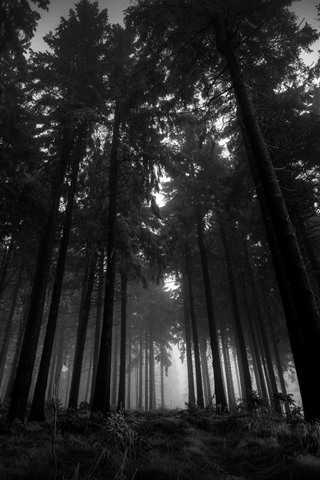 iPhone Обои Лес, деревья, туман, сумерки