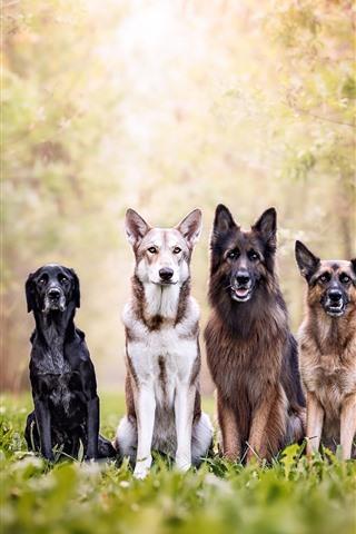 iPhone Обои Четыре собаки, лес, трава