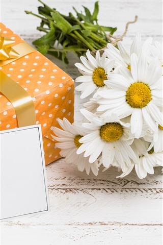 iPhone Wallpaper Gift, white chamomile flowers, romantic