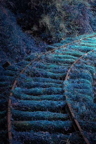 iPhone Wallpaper Railroad, grass, moss