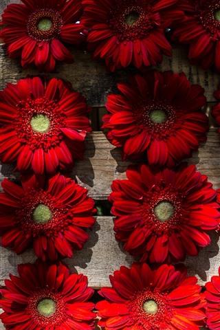 iPhone Wallpaper Some red gerbera flowers, wood