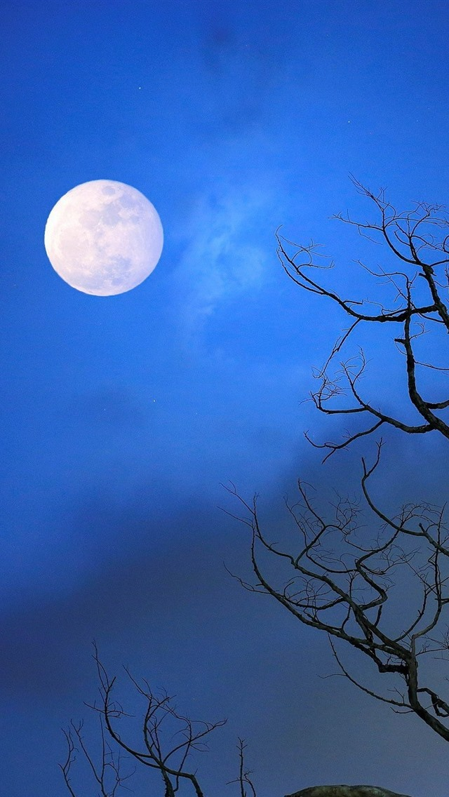 Tree Moon Blue Sky Night 640x1136 Iphone 5 5s 5c Se Wallpaper Background Picture Image