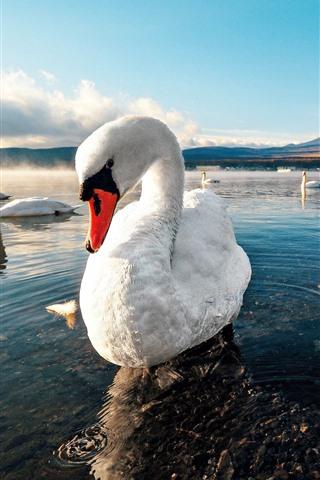 iPhone Wallpaper White swans, lake, water, mountains