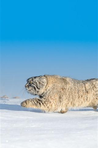 iPhone Wallpaper Wildcat, run, snow