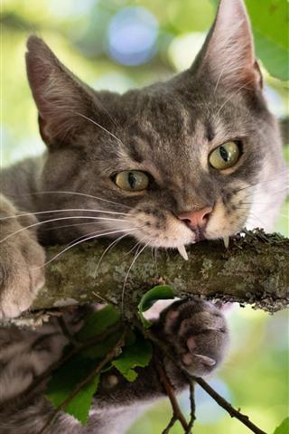 iPhone Wallpaper Wildcat, tree, green leaves