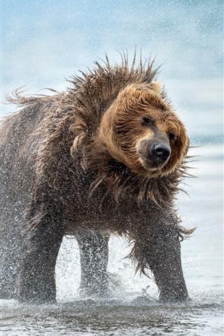 iPhone Wallpaper Bear, water splash, wildlife