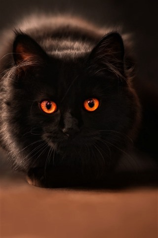 iPhone Wallpaper Black cat, orange eyes, mouse