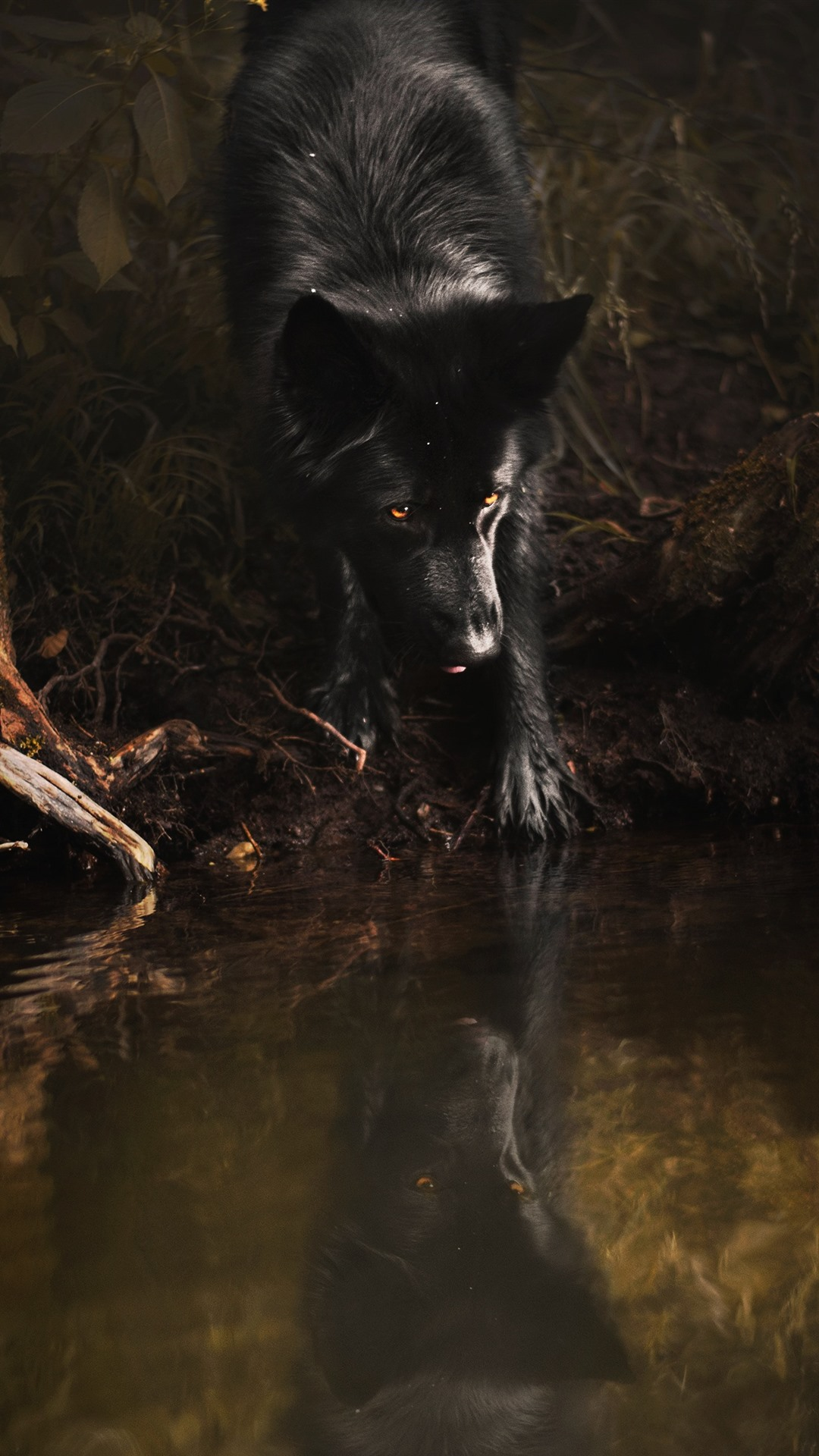 Black Wolf Yellow Eyes Water 1125x2436 Iphone 11 Pro Xs X Wallpaper Background Picture Image