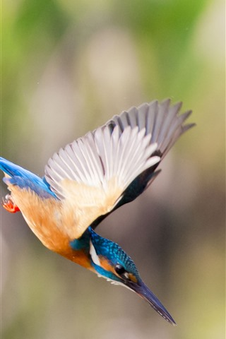 iPhone Wallpaper Kingfisher, flight, wings, attack