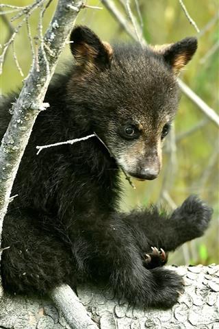 iPhone Wallpaper Little bear, tree
