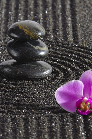 iPhone Wallpaper Pink phalaenopsis, stones, black sands