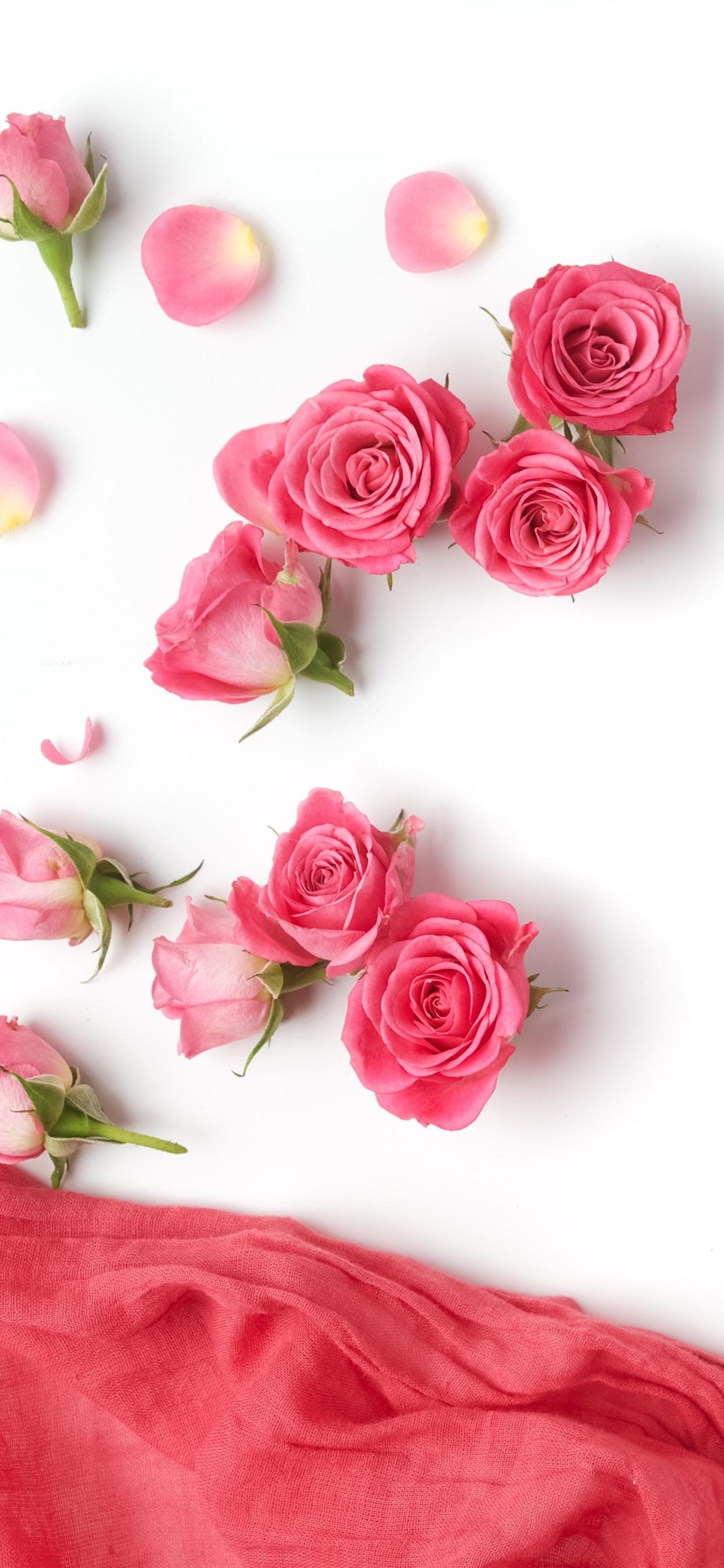 ピンクのバラ シルク 白背景 1242x2688 Iphone 11 Pro Xs Max 壁紙