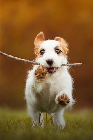 iPhone Wallpaper Puppy catch a stick and running