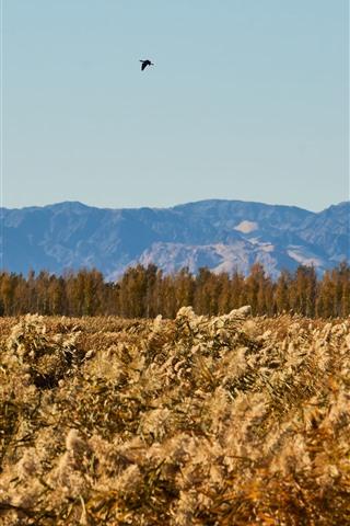 iPhone Wallpaper Reeds, trees, mountains, bird flight in sky