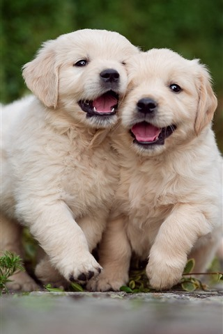 iPhone Wallpaper Two cute puppies, play games