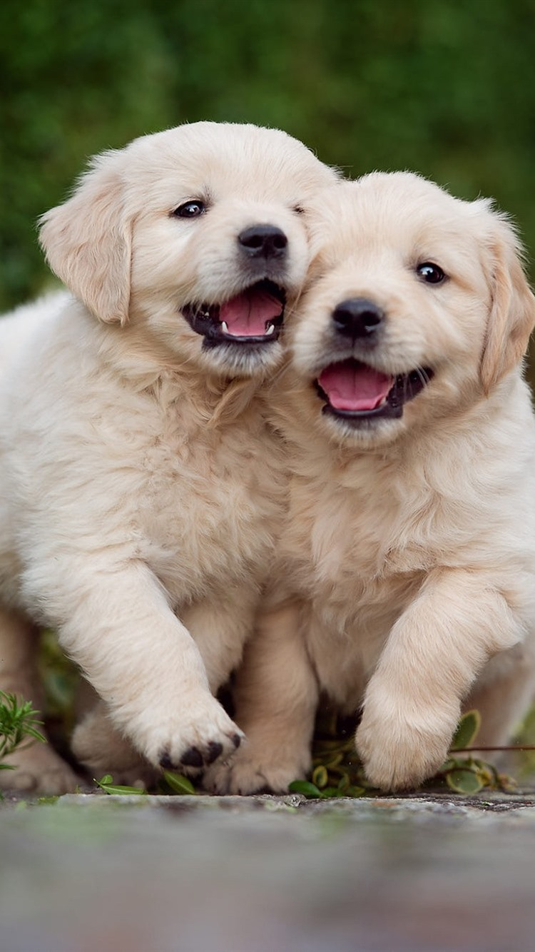 Two cute puppies, play games 750x1334 iPhone 8/7/6/6S