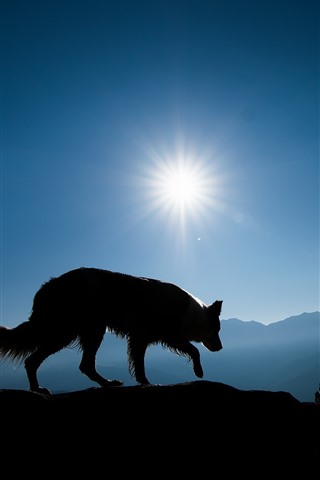 iPhone Wallpaper Wolf, mountains, sunshine, silhouette