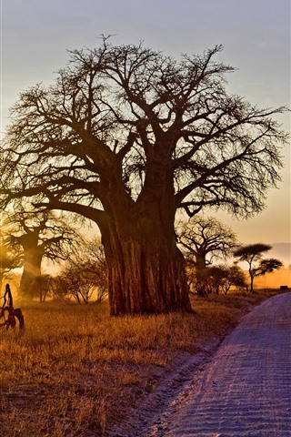 iPhone Wallpaper Africa, trees, road, sunshine, morning, autumn