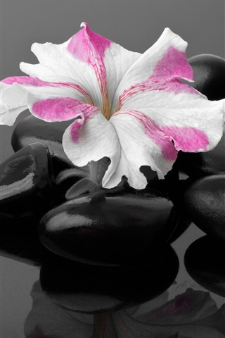 iPhone Wallpaper Black stones, one flower, SPA