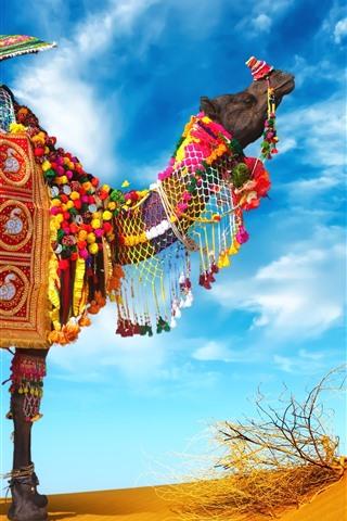 iPhone Papéis de Parede Camelo, guarda-chuva, decoração colorida, deserto
