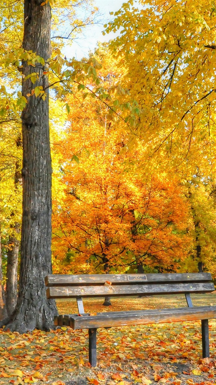 Golden Autumn Bench Trees Leaves Park 750x1334 Iphone 8