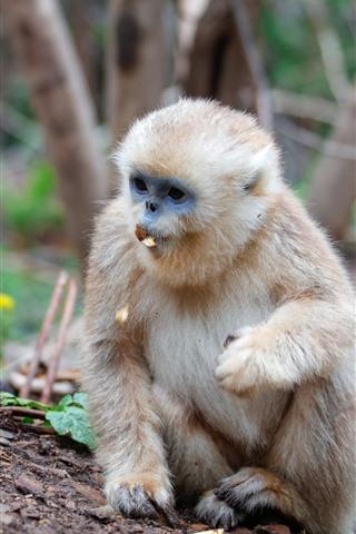 iPhone Wallpaper Monkey eating nut