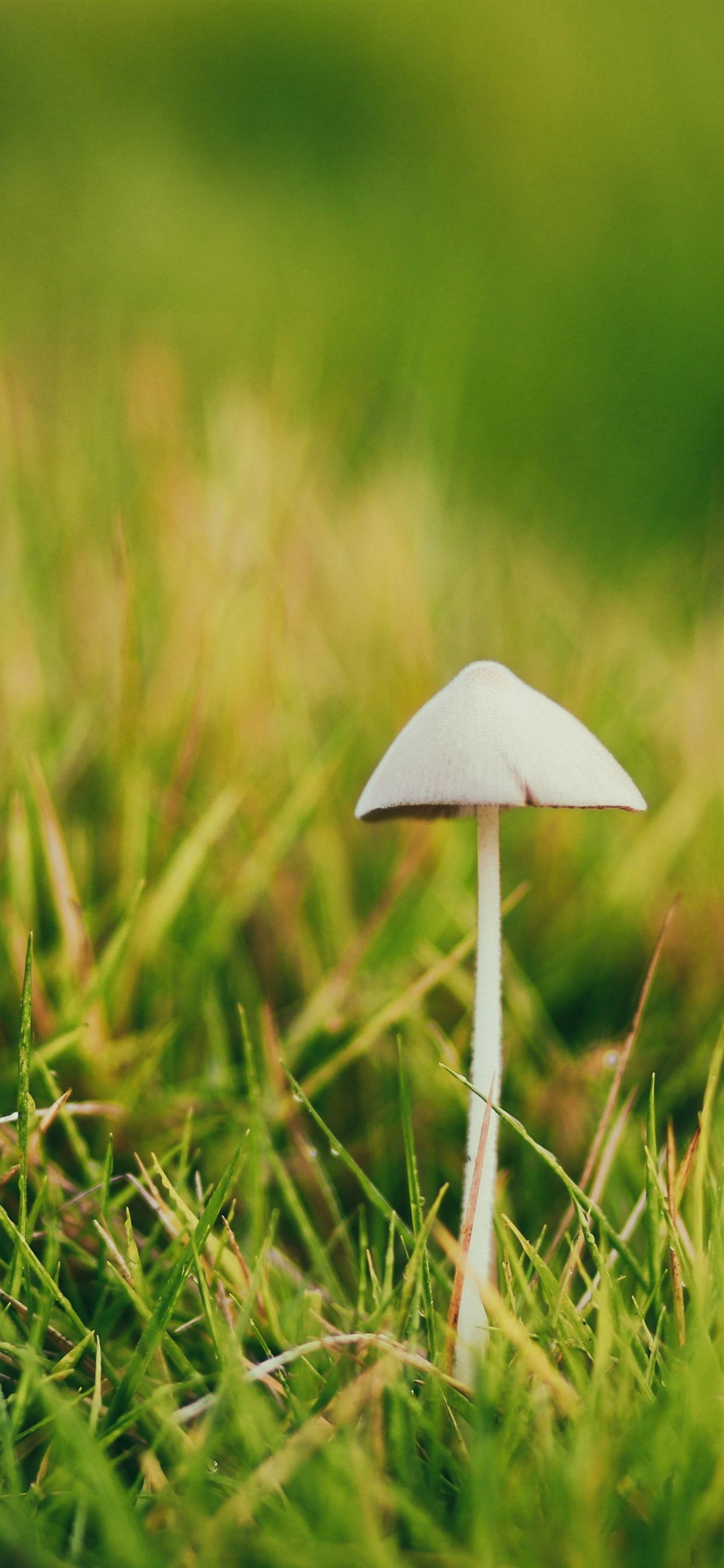 Mushroom Green Grass Spring 1242x2688 Iphone Xs Max