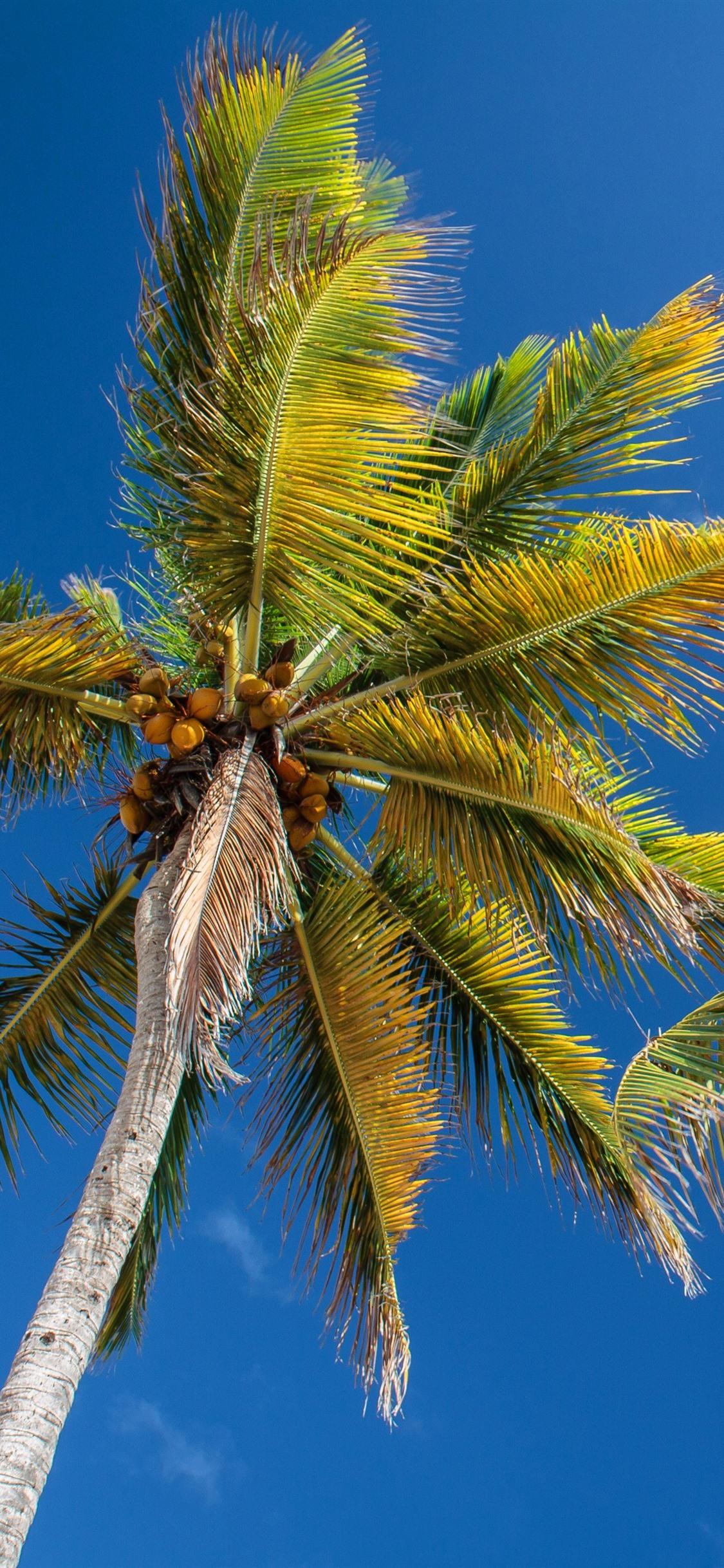 Palm trees, trunk, blue sky 1125x2436 ...