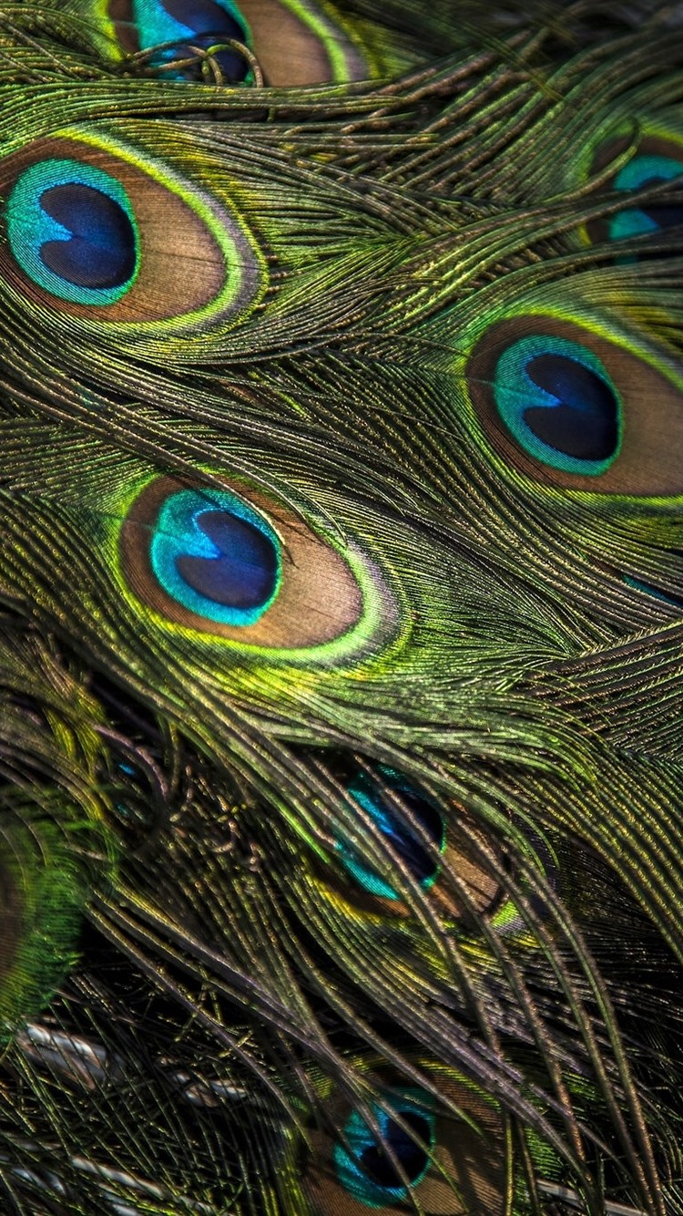 Peacock Feather Close Up Texture 750x1334 Iphone 8 7 6 6s