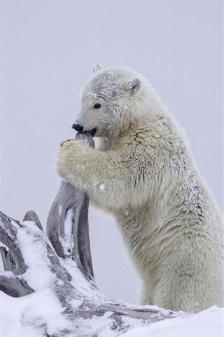 iPhone Wallpaper Polar bear, snow, dry tree