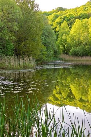 iPhoneの壁紙 池、木、緑、水の反射