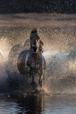 iPhone Wallpaper Some horses running in water, splash