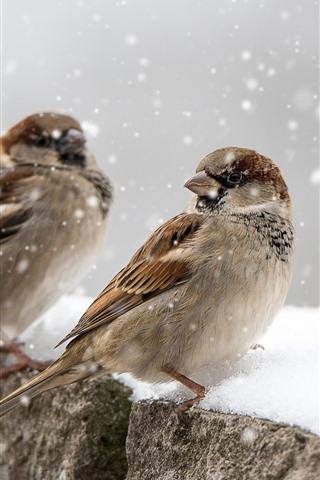 iPhone Wallpaper Three sparrows, snow, winter