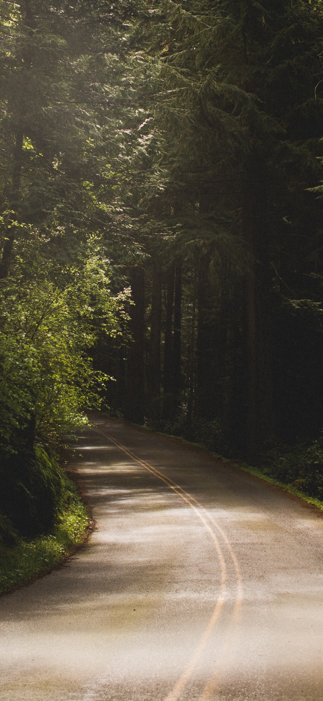 Trees Road Shadow Mist 1242x2688 Iphone 11 Pro Xs Max Wallpaper Background Picture Image