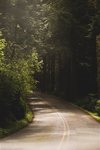 iPhone Wallpaper Trees, road, shadow, mist