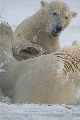 iPhone Wallpaper Two polar bears playful, snow, sea