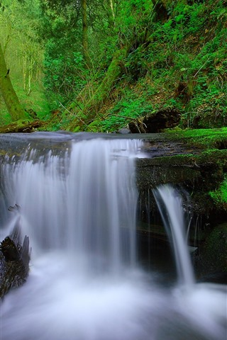 iPhone Wallpaper Waterfall, tree, moss, green, nature
