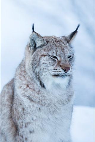 iPhone Wallpaper Wildcat, lynx, winter, bokeh