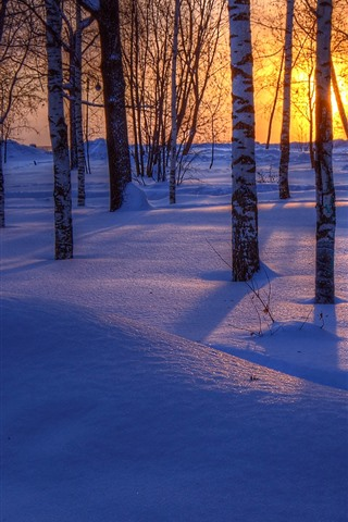 iPhone Wallpaper Winter, trees, thick snow, shadow, sunset