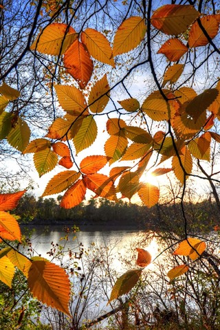 iPhone Wallpaper Autumn, yellow leaves, backlight, lake