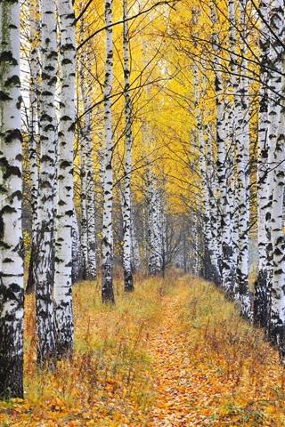 iPhone Wallpaper Birch, trees, autumn
