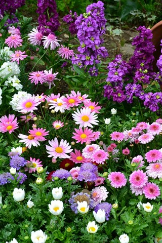 iPhone Wallpaper Colorful flowers, pink, white, purple, vase, garden