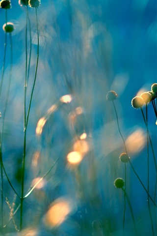 iPhone Wallpaper Plants, wildflowers, hazy