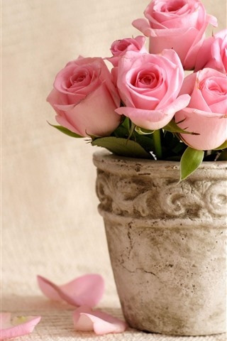 iPhone Wallpaper Some pink roses, petals, vase