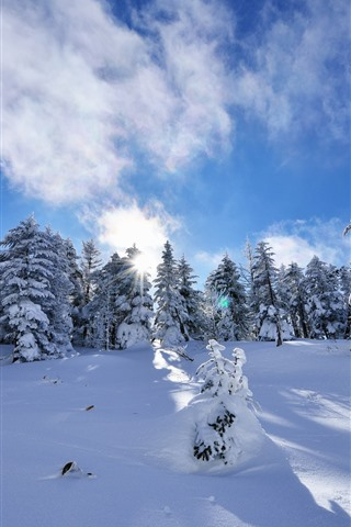 iPhone Wallpaper Spruce, winter, trees, thick snow, sun rays, shadow, blue sky