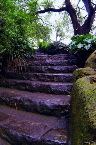 iPhone Wallpaper After rain, trees, stairs, wet